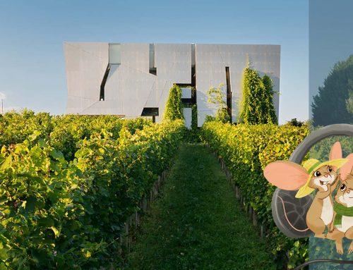 Ein Weinerlebnis für die ganze Familie: Multimediatour und Augmented-Reality-Erlebnis in der LOISIUM WeinWelt